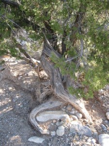 Dixon, New Mexico 027